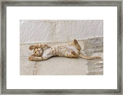 Kitten Playing, Greece Framed Print by Jean-Louis Klein & Marie-Luce Hubert