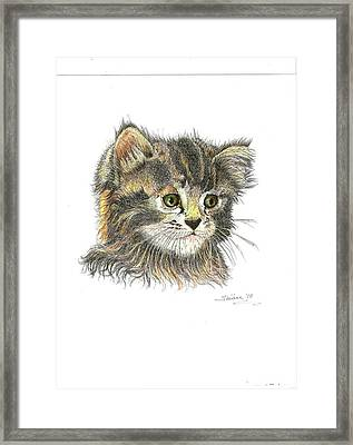 Kitten Framed Print by Bill Hubbard