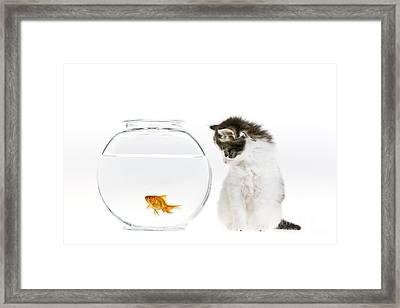Kitten Watching A Goldfish Framed Print by Jean-Louis Klein & Marie-Luce Hubert
