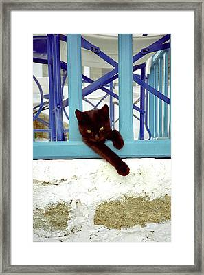 Kitten With Blue Rail Framed Print