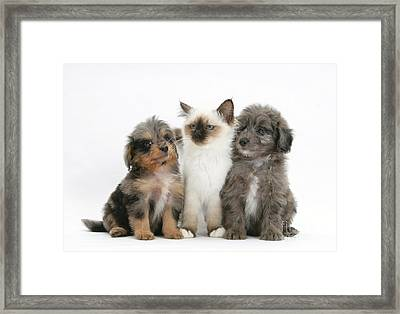 Kitten With Puppies Framed Print
