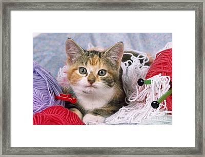Kitten With Yarn Framed Print by John Daniels