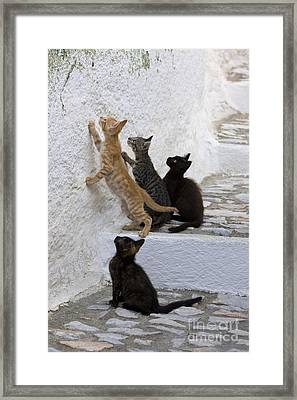 Kittens Chasing Woodlouse Framed Print by Jean-Louis Klein & Marie-Luce Hubert