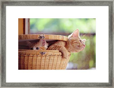 Kittens In Basket Framed Print by Sarahwolfephotography