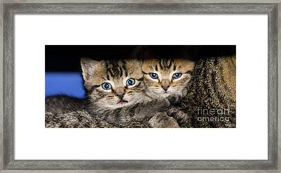 Kittens In The Shadow Framed Print