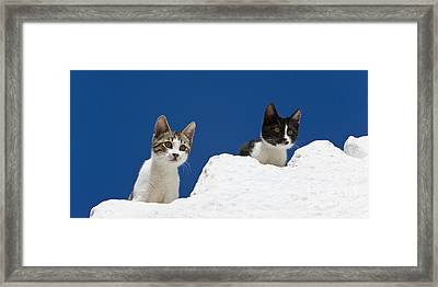 Kittens On A Greek Island Framed Print by Jean-Louis Klein & Marie-Luce Hubert