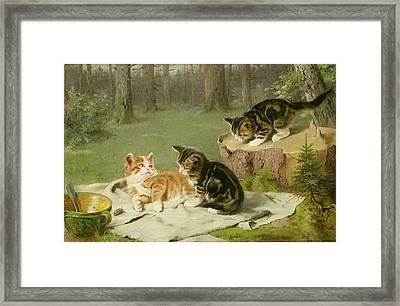Kittens Playing Framed Print by Ewald Honnef