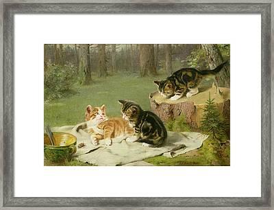 Kittens Playing Framed Print