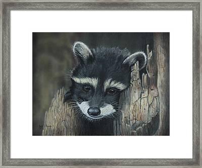 Kit...the Baby Raccoon Framed Print