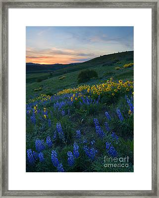 Kittitas Wildflower Sunset Framed Print by Mike Dawson