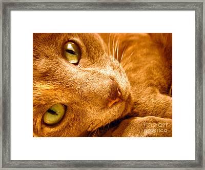 Kitty Framed Print by Amanda Barcon