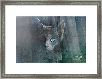 Kitty At The Window Framed Print