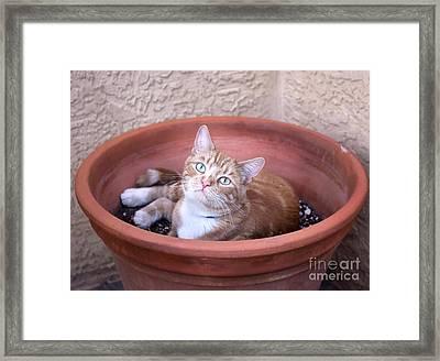 Kitty Bulbs Framed Print