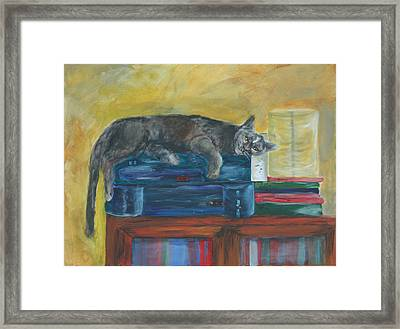 Kitty Comfort Framed Print