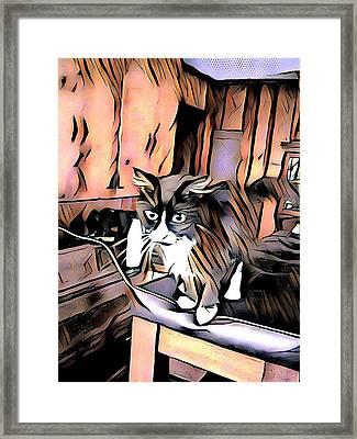 Kitty Curiosity Framed Print by Joshua Massenburg