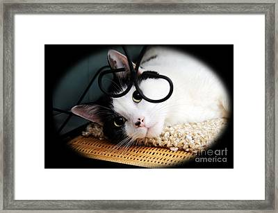 Kitty Cuteness Soft And Sweet Framed Print by Andee Design