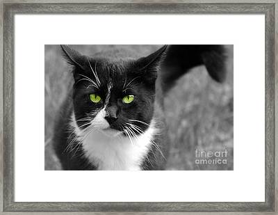 Framed Print featuring the photograph Kitty Fallowing by Lila Fisher-Wenzel