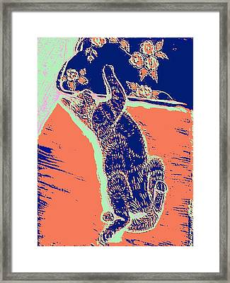 Kitty Heaven Framed Print by Vincent Mantia
