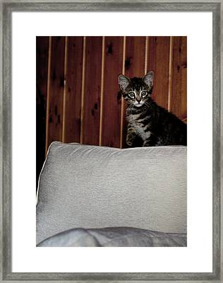 Framed Print featuring the photograph Kitty by Laura Melis
