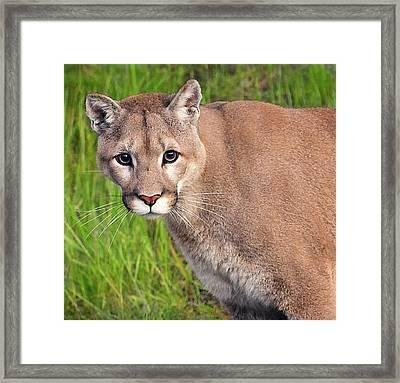 Kitty Look Framed Print