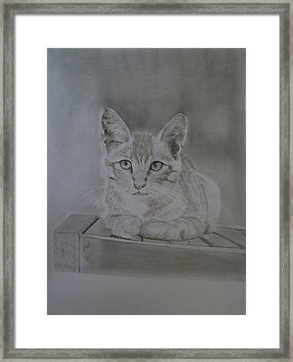 Kitty Framed Print by Maria Woithofer