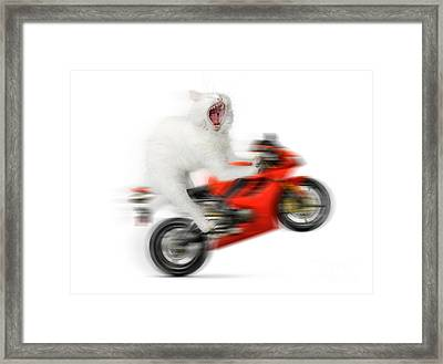 Kitty On A Motorcycle Doing A Wheelie Framed Print by Oleksiy Maksymenko