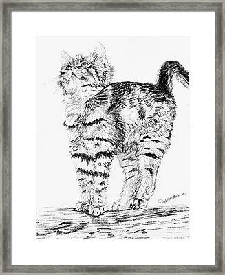 Kitty Stretch Framed Print by Deb Stroh Larson