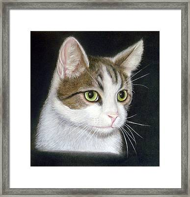 Kitty The Cat Framed Print by Mary Mayes