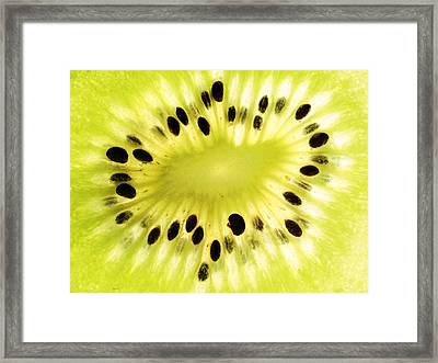 Kiwi Fruit Framed Print by Paul Ge