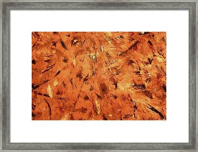 Knife Technique Framed Print by Guillermo Mason