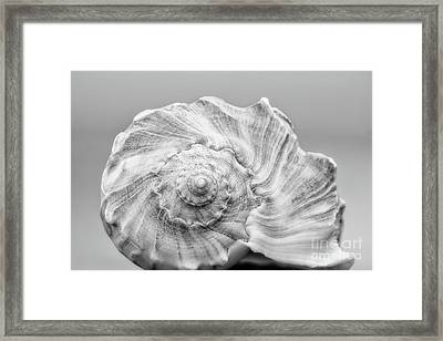 Framed Print featuring the photograph Knobbed Whelk by Benanne Stiens