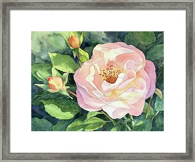 Knockout Rose And Buds Framed Print by Vikki Bouffard
