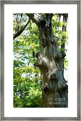 Knots And More Knots Framed Print by Kathy Flugrath Hicks