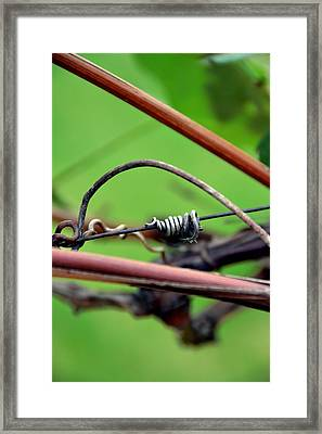 Knotted Framed Print by Angelina Vick