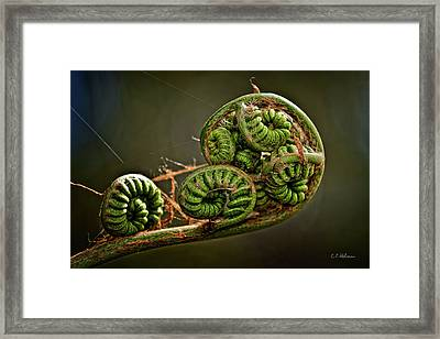 Knotted Framed Print by Christopher Holmes