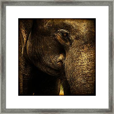 Knowing Framed Print by Andrew Paranavitana