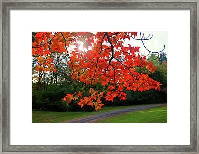 Knox Park 8444 Framed Print