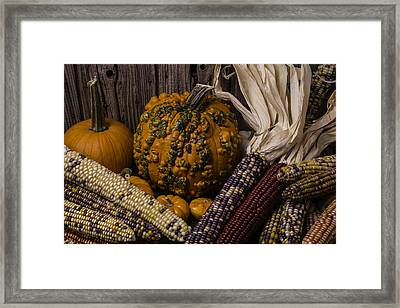 Knuklehead Pumpkin And Indian Corn Framed Print by Garry Gay