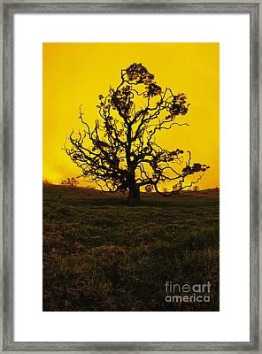 Koa Tree Silhouette Framed Print
