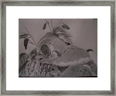 Koala Bear Sleeping Original Pencil Sketch By Pigatopia Framed Print by Shannon Ivins