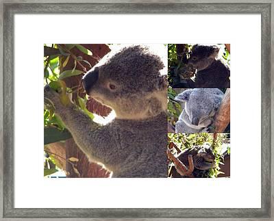 Framed Print featuring the photograph Koalas Unite by Amanda Eberly-Kudamik
