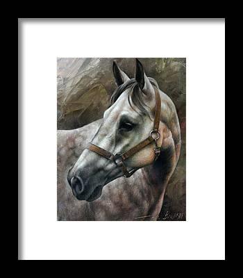 Horse Artwork Framed Prints
