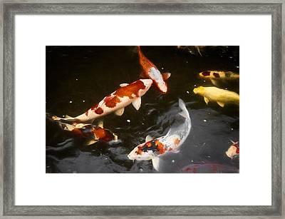 Koi 3 Framed Print
