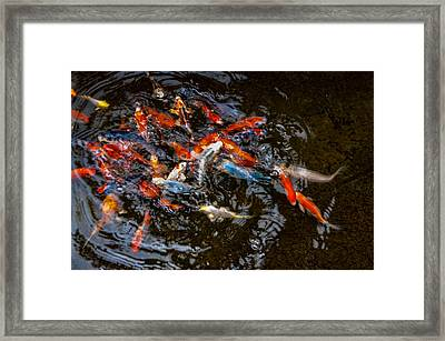 Koi 4 Framed Print
