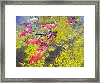 Koi And Friends Framed Print