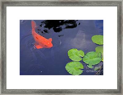 Koi And Lily Pads Framed Print by Mary Deal