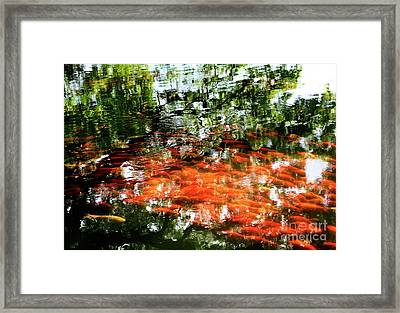 Koi And Reflections I Framed Print by Charmian Vistaunet