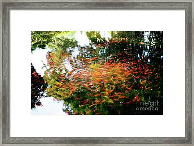 Koi And Reflections II Framed Print by Charmian Vistaunet