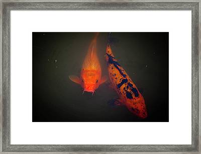 Koi Framed Print by Christina Durity