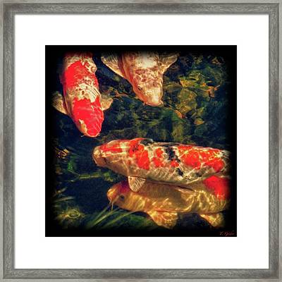 Koi Fish Fresco Square Edition - Black Vignette With Signature Framed Print by Tony Grider